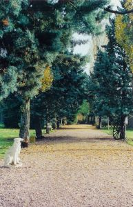 L'auberge canine et féline